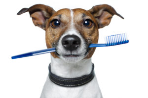 dog dentist jax beach fl.